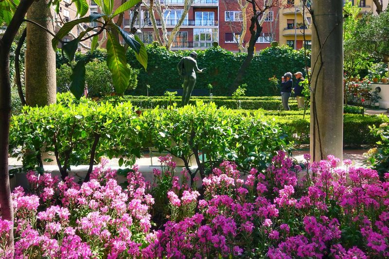 Pink Pink Flower SPAIN Tourism Madrid Spain Madrid Museum Sorolla Courtyard  Spanish Style Outdoor Light And Shadow Impressionism Tourist Attraction  Paradise Flower Tree Flower Head Plant Architecture Green Color Domestic Garden Blooming Petal In Bloom Plant Life Garden Botany Pollen Blossom