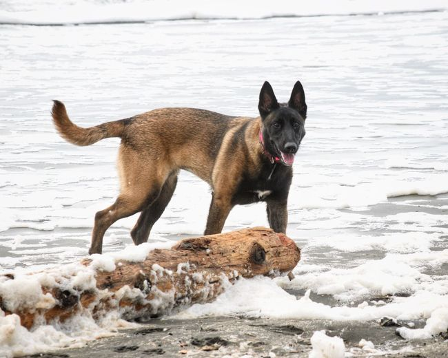 Dog on beach by sea during winter