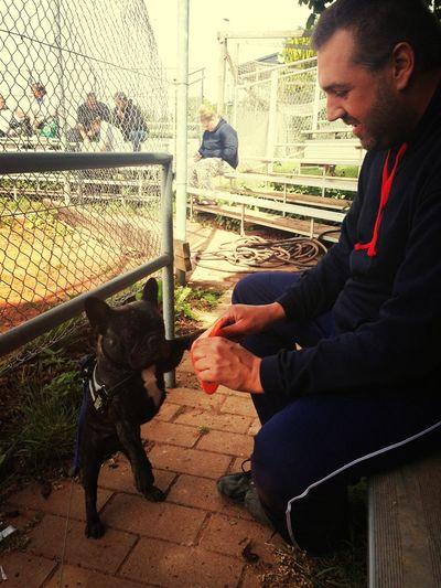 Softball Dog