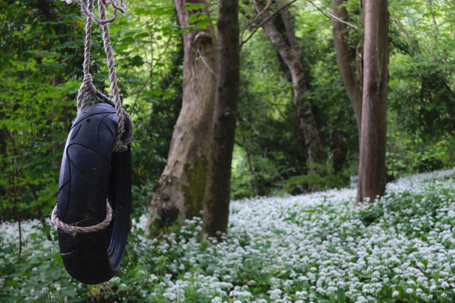 Beauty In Nature English Countryside Green Green Color Kennet And Avon Canal Nature Plant Plants Plants And Flowers Play Play In Nature Rope Swing Swing Tire Swing Tyre Swing White Flowers Wild Garlic Wild Garlic Flowers Wildflowers WoodLand Woods