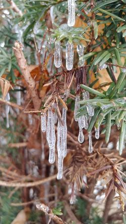 Brrr, Its Cold Outside LG V30 Nature_collection Morning Light Naturelovers Nature Not My Garden The Wisdom Is In The Trees Not The Glass Windows Good Morning Sunshine Eye 4 Enchanting Water Cold Temperature Winter Hanging Frozen Ice Close-up Icicle Plant Life