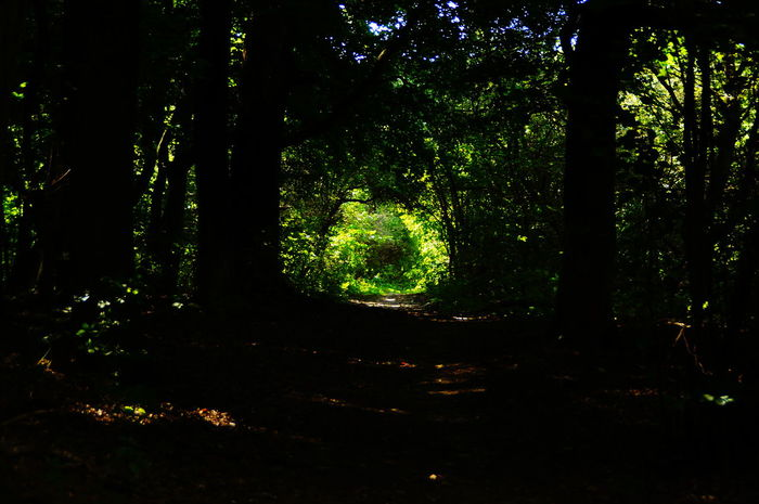 Hole to another world - from the dark forest to the sunny field Dark Beauty In Nature Branch darkness and light Day Forest Growth Hole Landscape Nature No People Outdoors Pilis Pilisszántó Scenics Spotlight Strange Tranquil Scene Tranquility Tree Tree Area Tree Trunk WoodLand