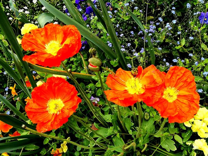 Flower Flower Head Petal Freshness Beauty In Nature Growth Orange Color Nature Fragility Plant Vibrant Color Outdoors