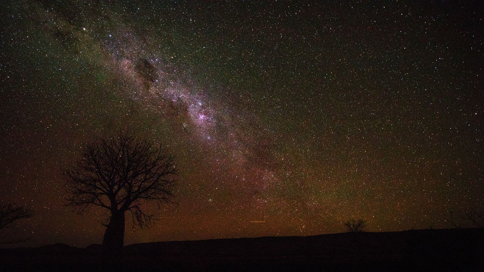 Boab tree at night Adansonia Gregorii Astronomy Bare Tree Beauty In Nature Boab Tree Constellation Galaxy Landscape Low Angle View Milky Way Nature Night No People Outdoors Scenics Silhouette Sky Star - Space Star Field Starry Tranquil Scene Tranquility Tree