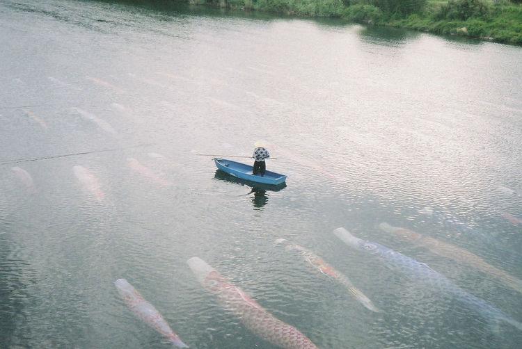 Water Lomo ファインダー越しの私の世界 Lomography Lomo LC-A Filmphotography フィルムに恋してる River 鯉のぼり Outdoors Nature 鯉流し 水中鯉のぼりFilmcamera ロモグラフィ フィルム写真普及委員会 フィルム写真 フィルムカメラ普及委員会