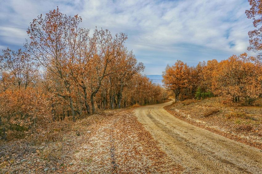 Autumn🍁🍁🍁 Autumn Colors Autumn Leaves Leaf 🍂 Leaf Leafs Amazing View Taking Photos Trees Sony A6000 Natur Nature Nature Photography Turkey Landscape Landscape_Collection Autumn Collection On The Way On The Road Hanging Out Enjoying Life Relaxing Taking PhotosEnjoying Life Tree