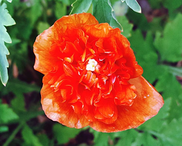 Flower Nature Flowerporn Natural Beauty Nature On Your Doorstep Denmark Check This Out Things I Like Special Colour Orange Color Naturel Beauty
