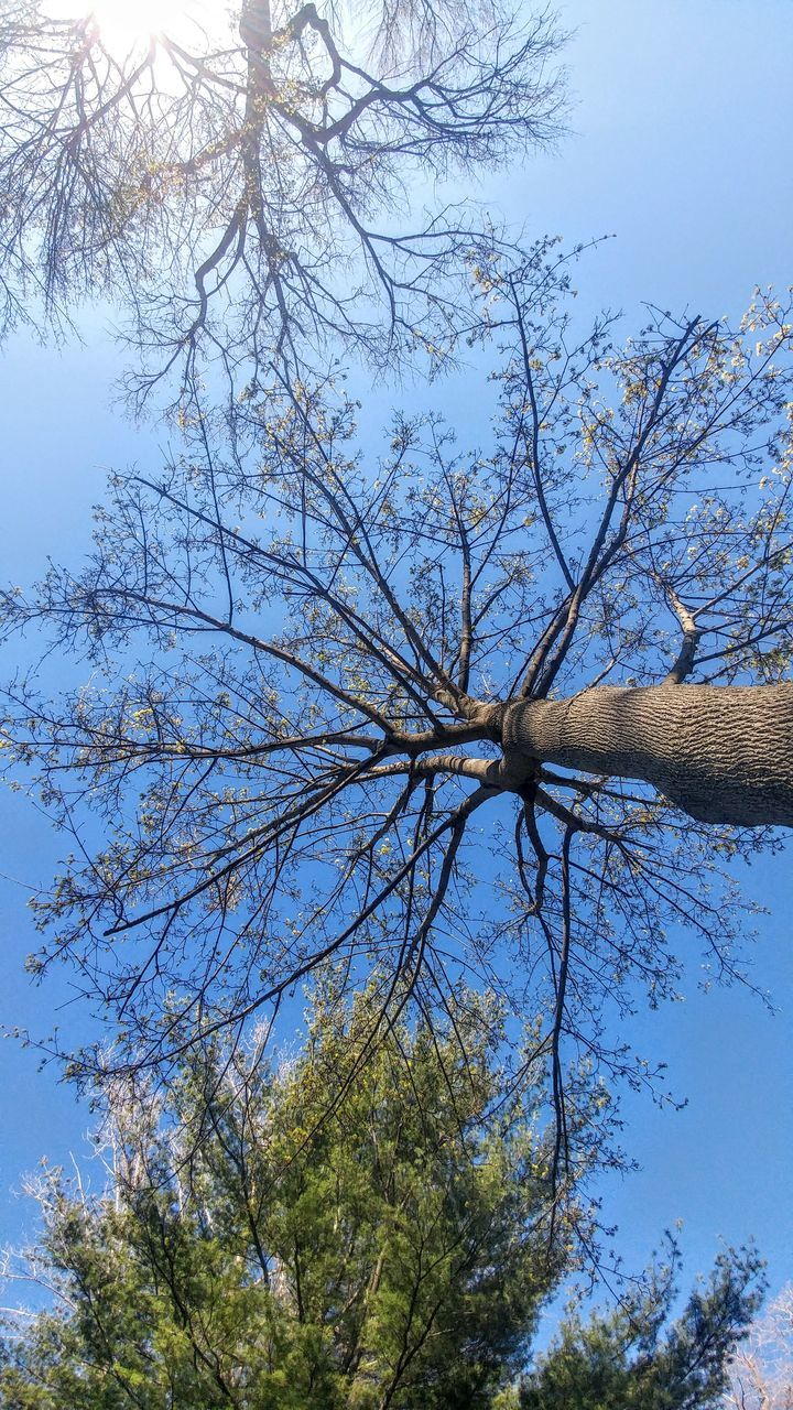 tree, low angle view, branch, nature, day, sky, outdoors, tree trunk, no people, bare tree, beauty in nature
