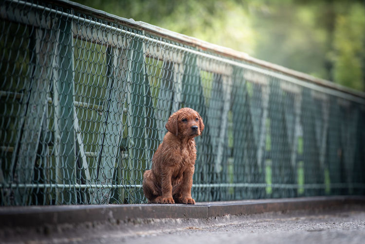 Puppy looking away while sitting against railing