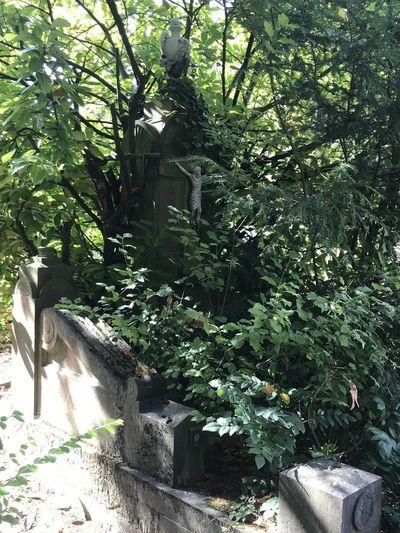 Trees growing in yard against building