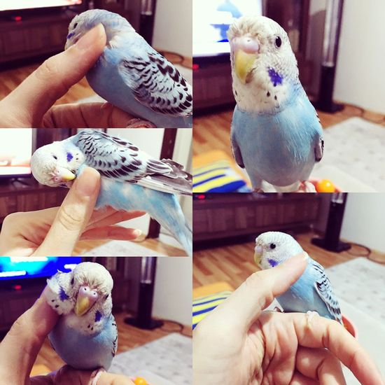 Mybird Sweet♡ ☺️❤️🐣🐤