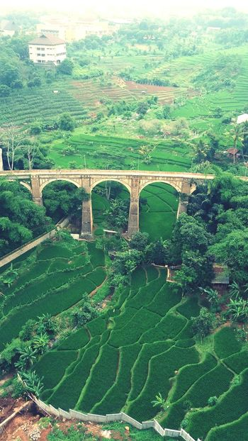 Beauty In Nature Goodplace Amazing View Landscape_photography Jatinangor Sumedang Jawabarat Landscape Natural Shinebright Photography Learning Photography Look And Like Looking To The Other Side Bridge View Ricefield View