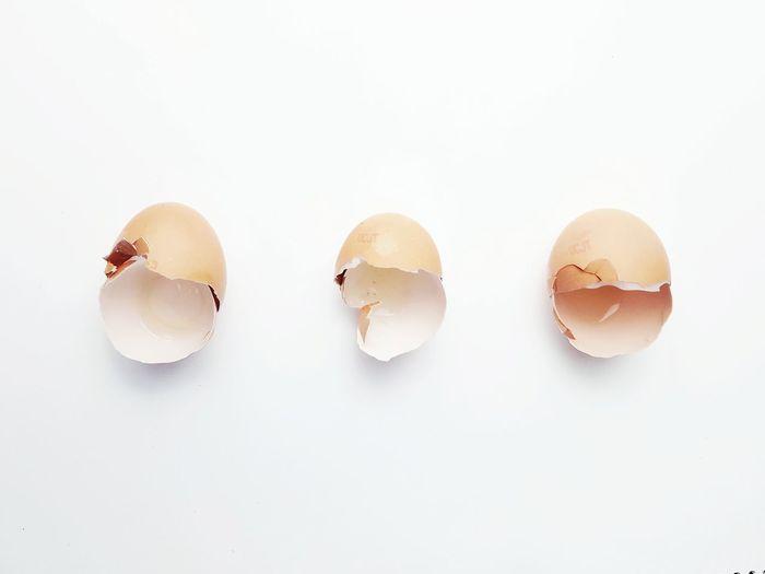 Egg Egg Shells