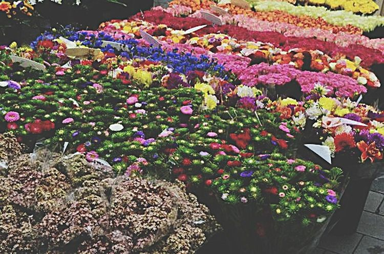 Flowers on a flowermarket in Bonn... so colorful Lifestyle Photography AkPhotography Theseandthisphotography Pboto Blogger Street Photography Flowers Cities Urbanphotography
