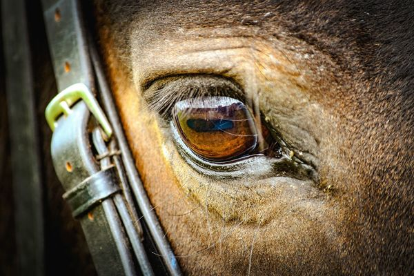 Horse eye with bridle on. Keen to be riden 🐴 Equine Photography Brown Eyes Leather Brown Foreverphotogenic Equinelife Close-up Eyeball Detail Eyesight Eyelash Iris