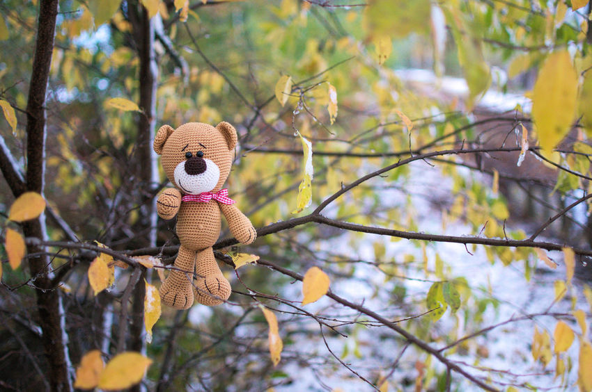 Teddy Bear Stuffed Toy Tree Baum No People Nature Nature Natur Outdoors Beauty In Nature I Choose You  Brown Texture