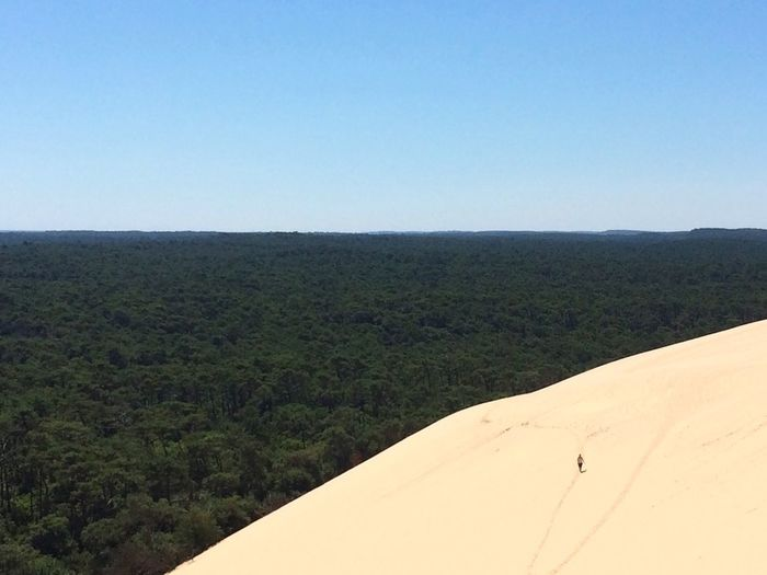 """"""" Lost on the dune """" I'm sorry for the quality but i have only my phone... Clear Sky Landscape Horizon Over Land Blue Summer Alone Forest Nature EyeEm Best Shots Eye4photography  Shootermag Getting Inspired Sand Dune Light And Shadow Silhouette"""