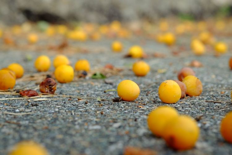 Fruit Fruits LoveNature Natura EyeEm Selects Fruit Yellow Autumn Leaf Road Acorn Close-up Food And Drink