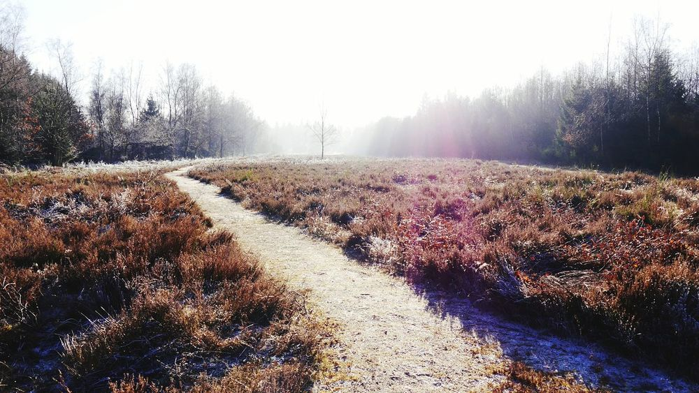 Trupbacher Heide Nature Dezember 2016 Cold Temperature Outdoors Winter No People Snow Forest Morning The Great Outdoors - 2017 EyeEm Awards