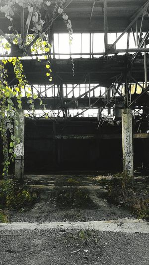 Nature Vs Concrete Abandoned Factory Check This Out Thingsifindinmyhood Hiddengems Urbexphotography Urbex