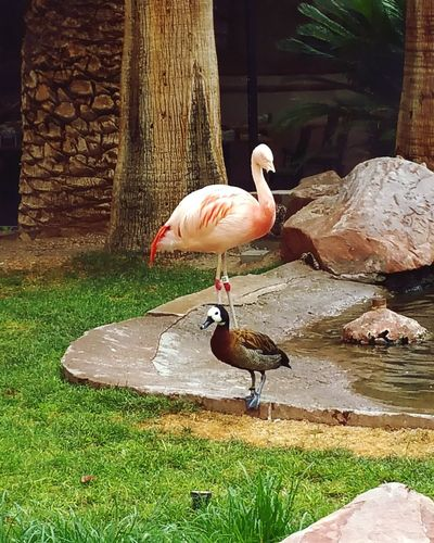 Two Is Better Than One Nature Photography Flamingo Duck Birds Bird Photography Nature Photography Travel Photography Wildlife Habitat Popular Photos