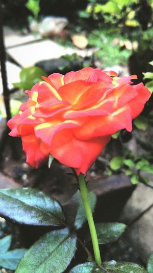 My garden Mira Road Mumbai, india