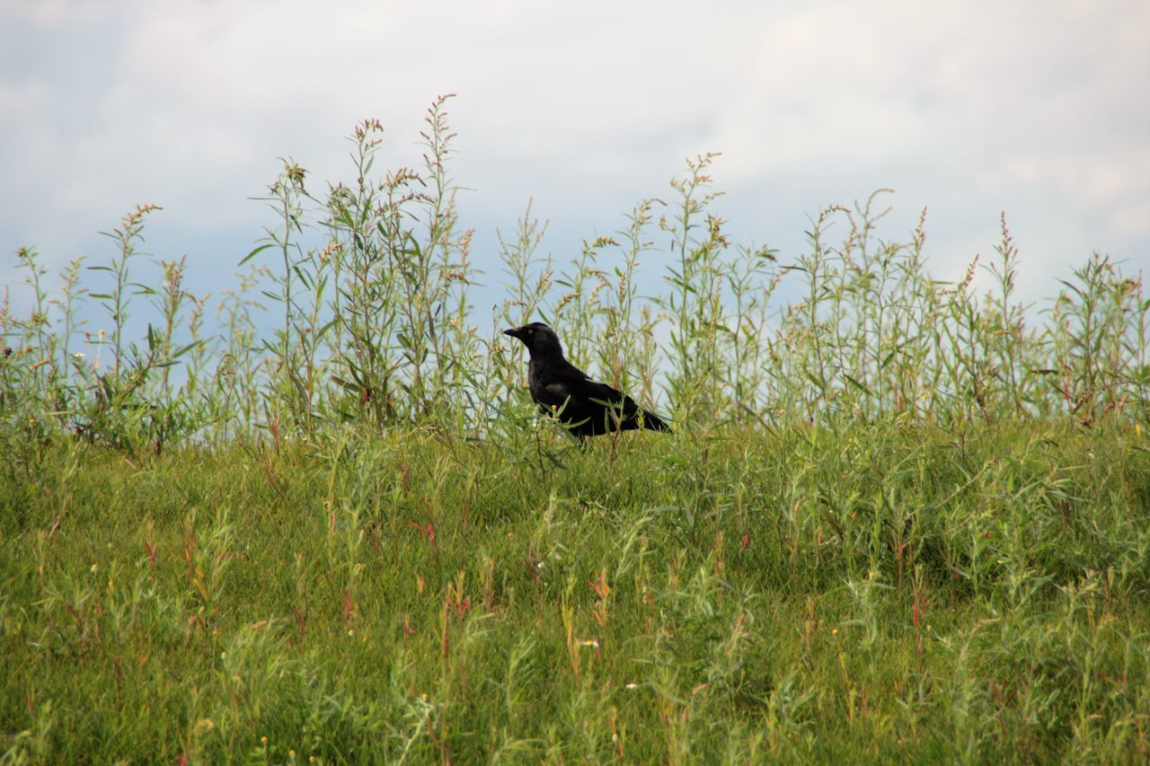 Side View Of Bird Perching On Plants Against Sky