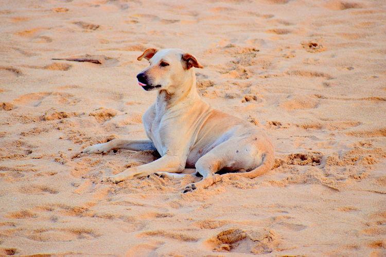 Dog sitting on sand