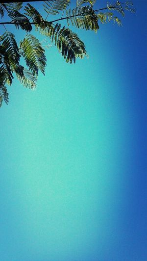 Goooood morning!! Simplicity
