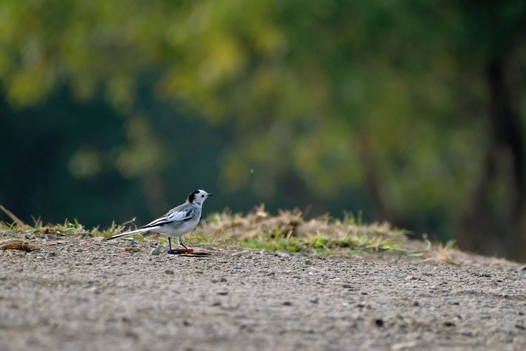 A small bird walking on ground looking for food