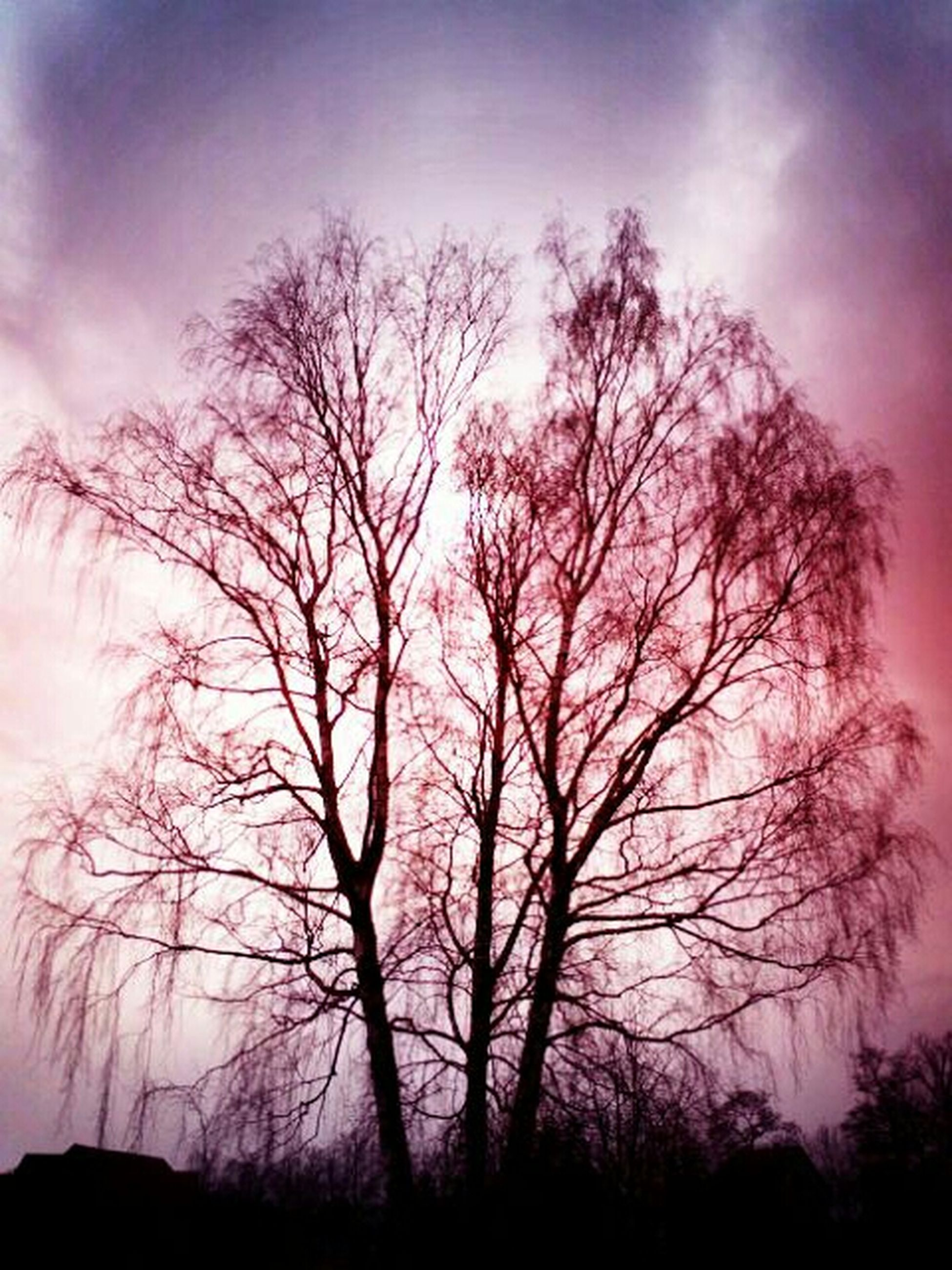 bare tree, tree, silhouette, sky, branch, tranquility, sunset, tranquil scene, beauty in nature, scenics, low angle view, nature, cloud - sky, dusk, tree trunk, idyllic, cloud, outdoors, non-urban scene, no people