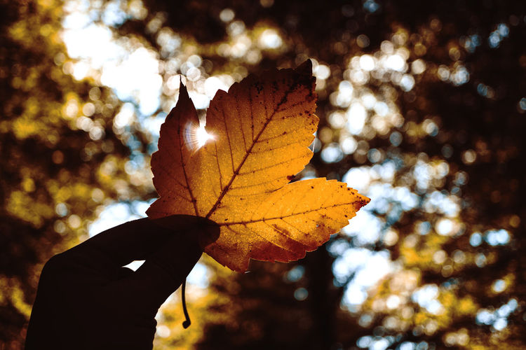 Close-up of hand maple leaf during autumn