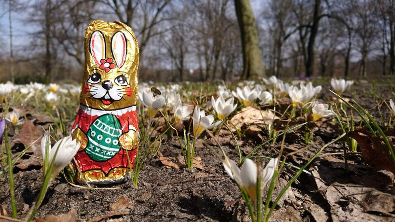 Happy Easter for everyone :-) Easter Easter Ready Easter Bunny Bunny  Krokusse Krokus Spring Springtime Spring Flowers Spring Is Coming  Citylife Chocolate Bunny Berlin Photography Tree Human Representation Close-up Grass Blooming