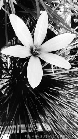 Monochrome Photography Colour Is Beauty