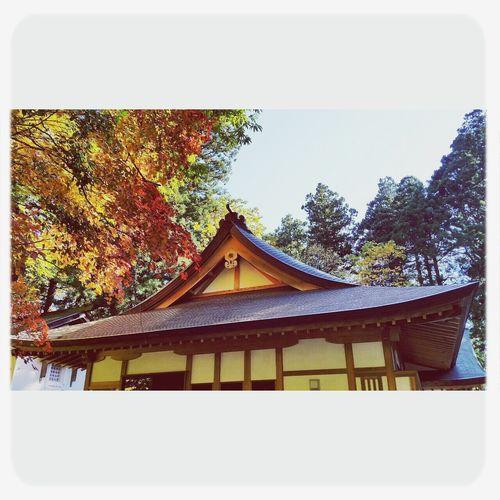 戸隠 Togakushi Shrine Autumn Nature
