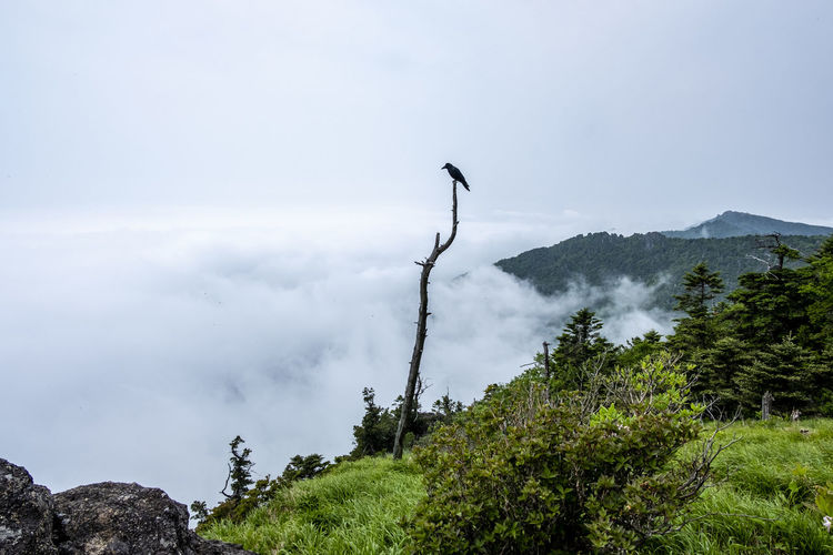 View of bird on mountain against sky