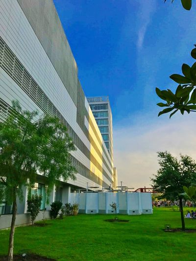 Plant Sky Architecture Building Exterior Built Structure Tree Grass Building Nature Day Cloud - Sky No People City Green Color Outdoors Modern Office Building Exterior Palm Tree
