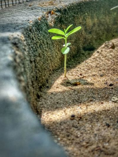 Plant Growth Sand Beauty In Nature Fragility Nature Green Color No People Close-up Hope.✌ New Rise Day