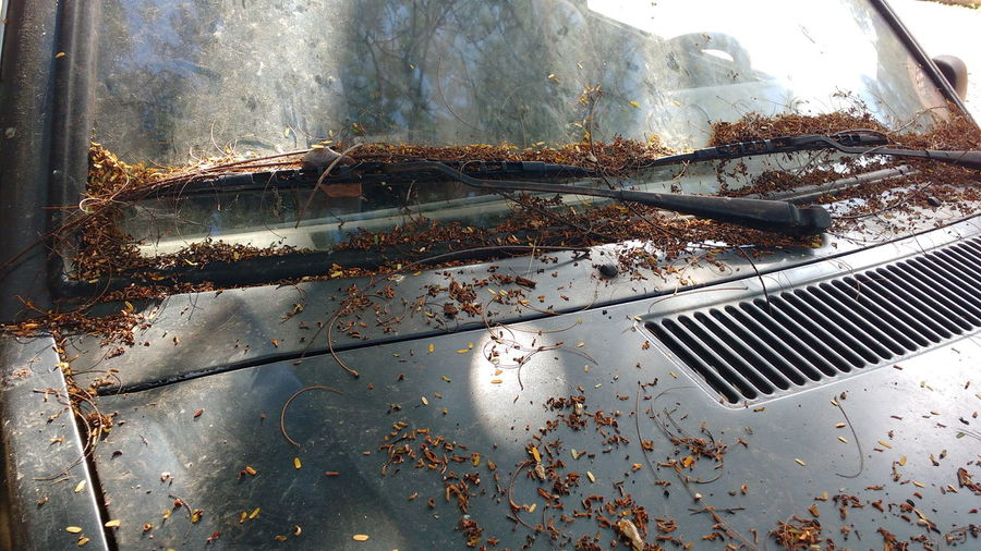 High angle view of dried leaves on old car