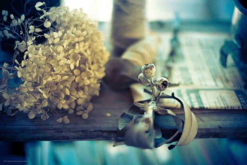 Dried Flowers On Wooden Shelf
