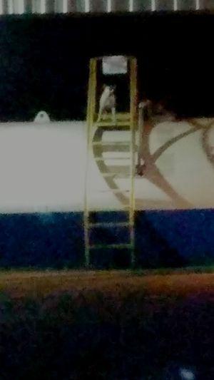 En mi trabajo 12: 48 am la pitbull se sube por las escaleras al tanque de disel .