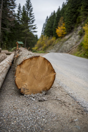 Close-up of logs on road