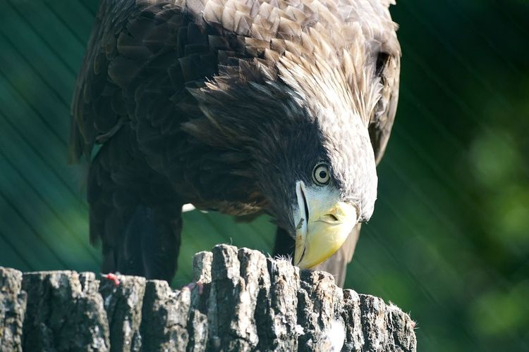 Low angle view of eagle perching on tree stump