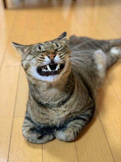 yawn IPhone XS