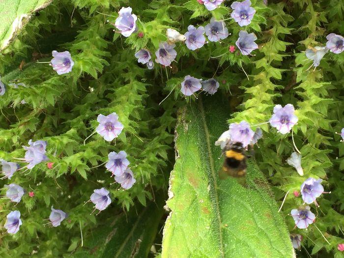 Nature On Your Doorstep Crantock Bee Flower Green Lilac Flowers Summer Lilac Flower Nature_collection Beautiful Nature Wildlife