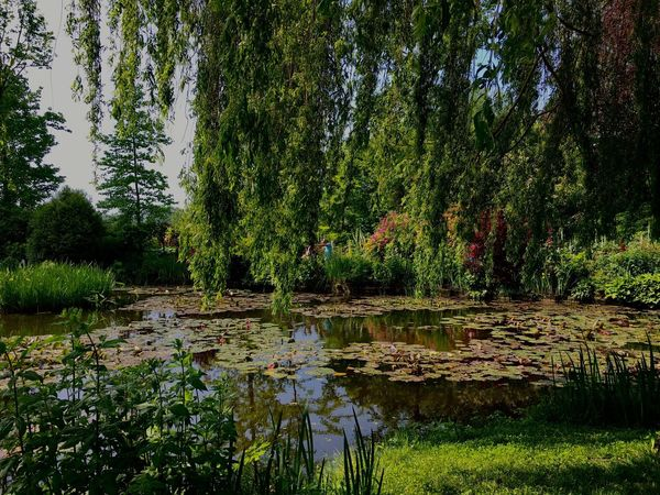 Water Tree Tranquil Scene Tranquility Lake Reflection Growth Scenics Nature Beauty In Nature Green Tree Trunk Green Color Calm Day Countryside Majestic Remote No People Waterlilies Monet Garden The Great Outdoors - 2017 EyeEm Awards
