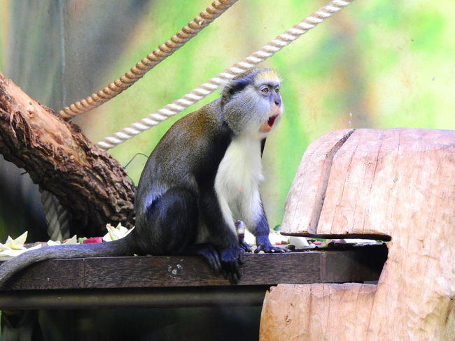 Animal Animal Themes Animal Wildlife Animals In The Wild Close-up Day Eating Focus On Foreground Food Food And Drink Mammal Monkey Nature No People One Animal Outdoors Primate Sitting Vertebrate Wood - Material