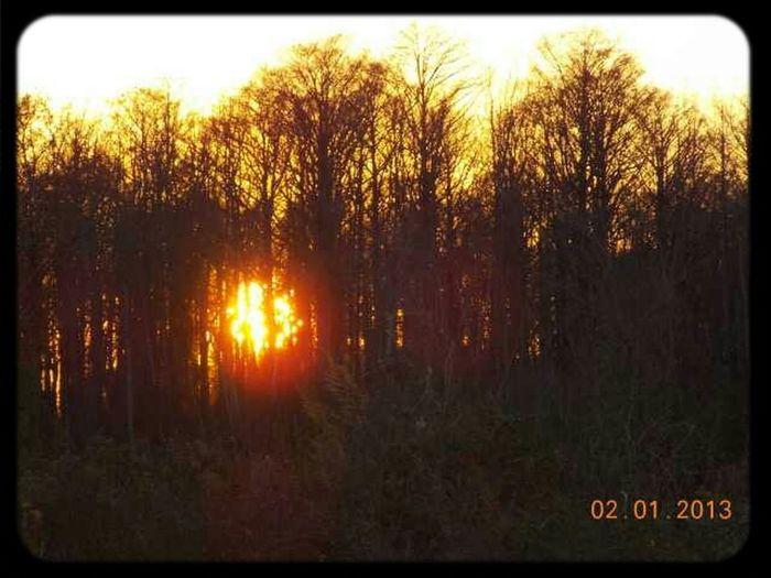 Sunsets Coastal Carolina Nikon L810 The Wisdom Is In The Trees Not The Glass Windows
