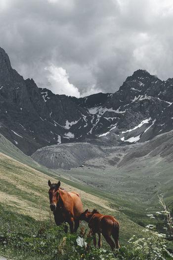 Horse on field against mountain range
