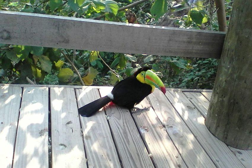 RelaxingTaking Photos Enjoying The Sun Birds Bird Photographybird collection Natural Photography Cartagena, Colombia nature